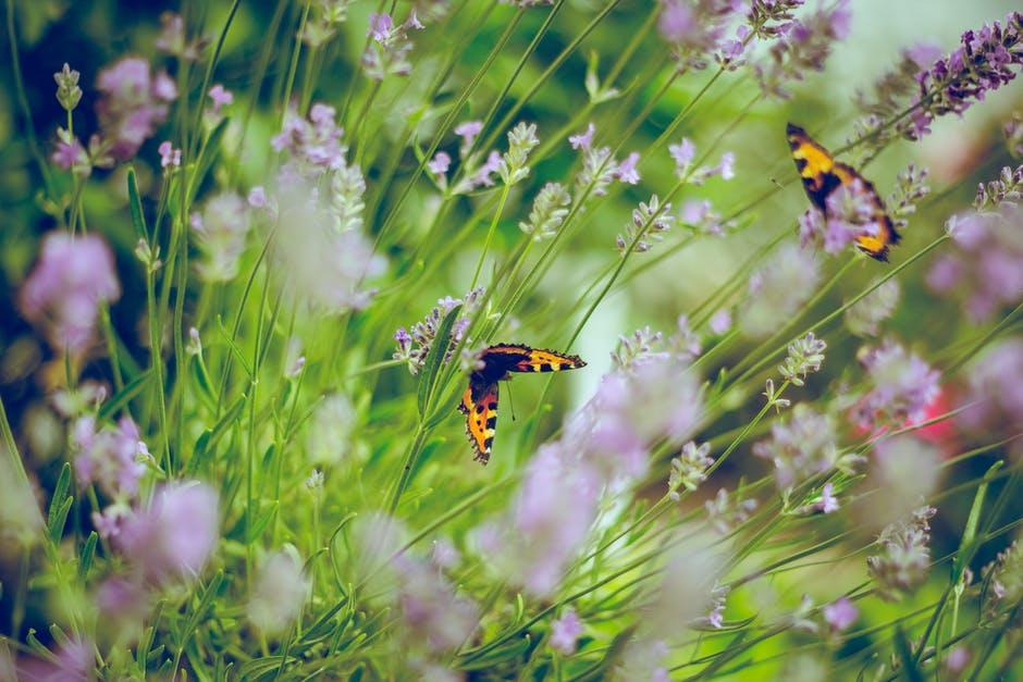 градината в нас