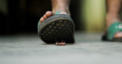 хлебарки
