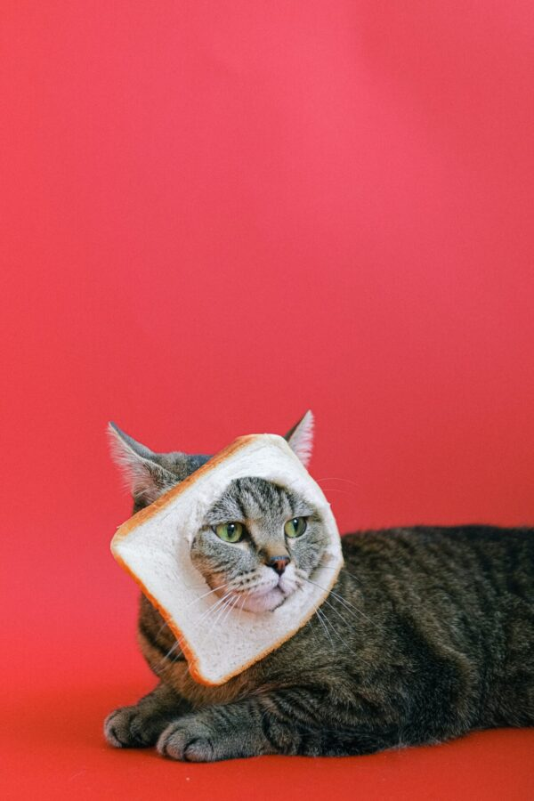 котка с филийка на лицето